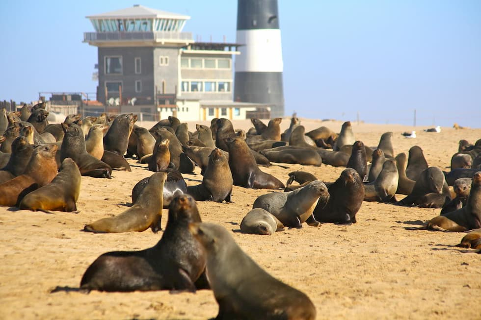 Seal Colony at Pelican Point Lodge