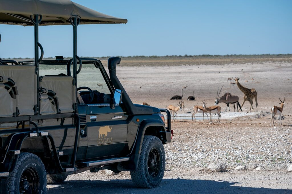 Game drive in Etosha National Park with Ungava
